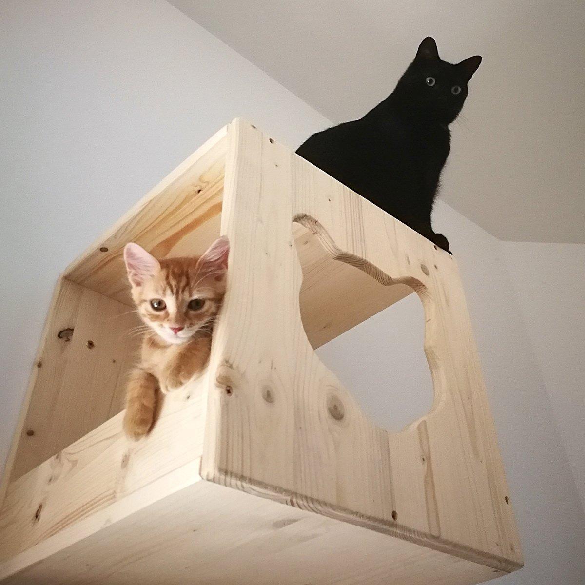 Costruire Cuccia Per Gatti percorsi per gatti - home